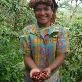 Берачи на кафе в Индонезия 2