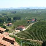 Изглед на лозови насаждения в Пиемонт Италия