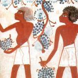 Древни египтяни берат грозде