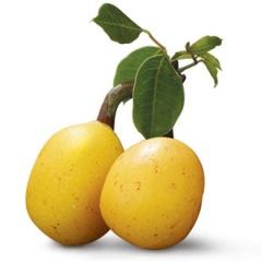 марула плод
