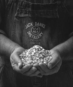 Зърното използвано при Джак Даниелс