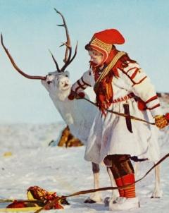 Отглеждането на северни елени е традиционно за Сами, местните жители н