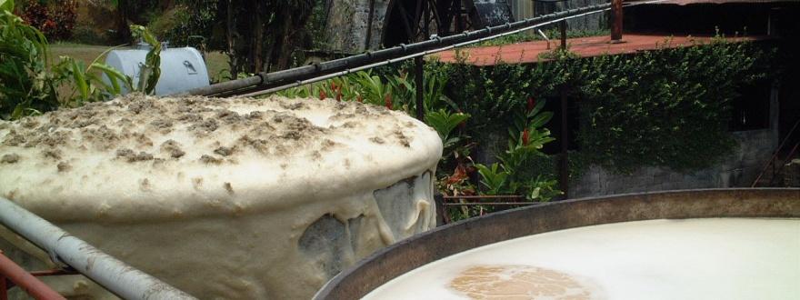 Ферментация на меласа за ром