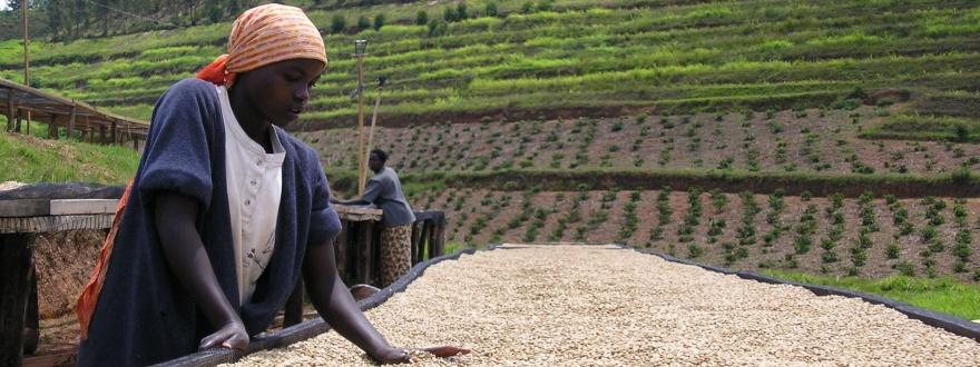 Обработка на кафе в Африка