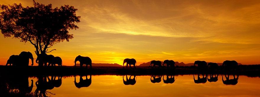 Амарула залез слонове